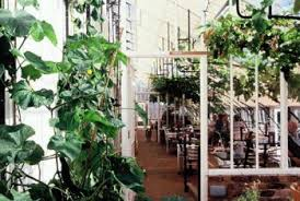 vinehouse café north places to go vegetarian living magazine