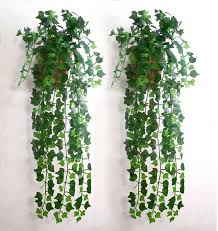 Plants Easy To Grow Indoors 10 Easy To Grow Indoor Plants In India India Pinterest