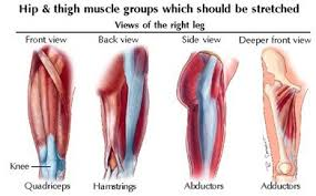 Picture Of Human Knee Muscles Muscle Strains In The Thigh Riverdale Sports Physical Therapy