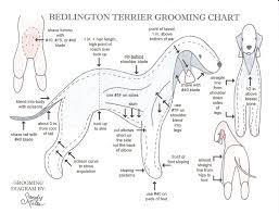 bedlington terrier stud dog grooming chart grooming chart dog grooming pinterest