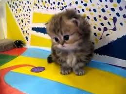 24634 cutest kittens images kitty cats
