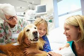Comfort Dogs Certification How Do I Get My Dog To Be A Therapy Dog Alliance Of Therapy