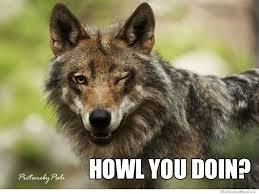 Meme Wolf - ridiculously photogenic wolf weknowmemes