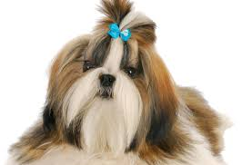 mobile pet grooming torrance lucky dawg salon grooming