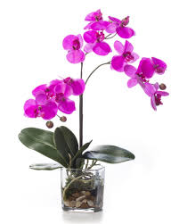 faux orchids lifelike phalaenopsis orchid artificial accent arrangement at