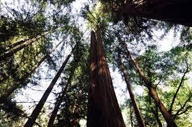 Muir Woods Map Muir Woods National Monument Die Mammutbäume Von San Francisco