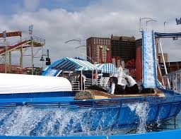 New York wild swimming images 103 best rides and rollercoasters images coney jpg