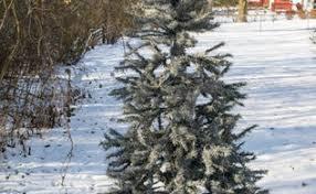 decco mesh christmas tree hometalk