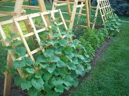 tomato ladder and cucumber trellis playing in the garden