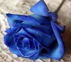 imagenes con flores azules dia de la maestra ranking de las flores mas bonitas del mundo listas en 20minutos es