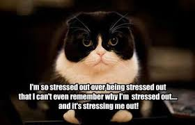 Stressed Out Memes - pin by jessica updike on quotes pinterest meme funny memes