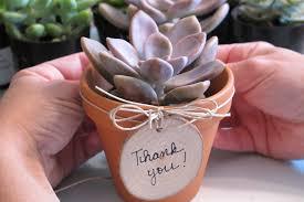 diy s gift simple sweet mini succulents inhabitots