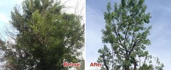tree trimming san diego ca tree pruning removal service el
