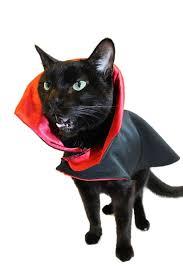 Black Kitty Halloween Costume Cat Clothes Cat Halloween Costume Vampire Cat Costume