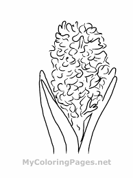 7 images of hyacinth coloring page flower hyacinth coloring page