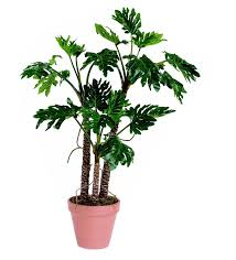 top house plants 13 best top houseplants for improving indoor air quality images on