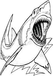white shark attack coloring pages printable
