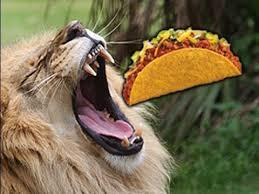 lions for sale lion meat tacos for sale