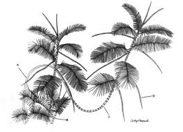 tropical palms introduction