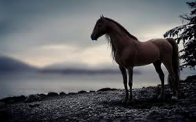 hd wallpapers 1242 horse hd wallpapers backgrounds wallpaper abyss