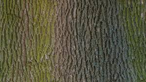 free photo tree bark wood texture photo free image on