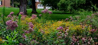 glen burnie gardens the museum of the shenandoah valley take a morning garden tour with msv director of gardens perry mathewes before the gardens open to the public perry will highlight seasonal blooms and