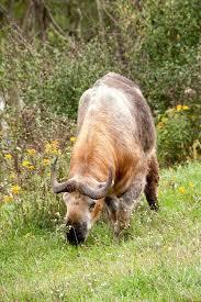 Ohio wild animals images 111 best zanesville ohio images zanesville ohio jpg
