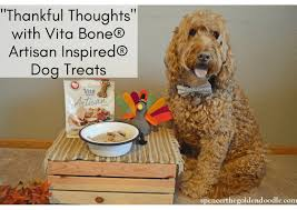 goldendoodle puppy treats spencer the goldendoodle the adventures of a rescued goldendoodle