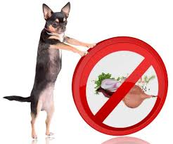 are onions for dogs can dogs eat onions or are onions bad for dogs and why