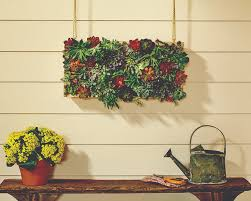 Hanging Succulent Planter by Dih Workshop Vertical Succulent Garden The Home Depot Blog