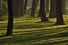 Light And Landscape - shadow landscape photography pictures to pin on pinterest pinsdaddy