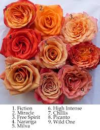 best 25 rose varieties ideas on pinterest rose bush beautiful