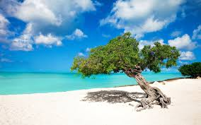 aruba offers free vacation to the atlanta falcons destination tips
