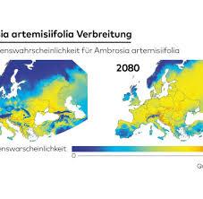Pollen Map Ambrosia Warum Beifußblättriges Traubenkraut Jetzt Noch