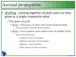 scion plant types of asexual propagation horticulture lecture slides docsity