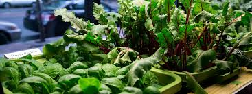 6 step guide to indoor vegetable gardening beginners guide