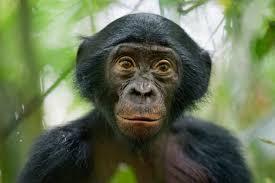 siege social bonobo press awards 2013 s best pictures photos