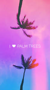 Palm Tree Wallpaper 201 Best Palm Trees Images On Pinterest Palms Palm Trees And Plants
