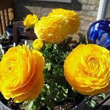 yellow flowers 25 most beautiful yellow flowers