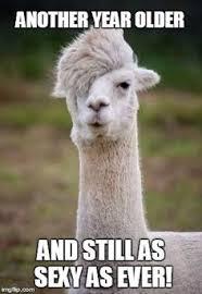 Funny Animal Birthday Memes - top 100 original and funny happy birthday memes happy birthday