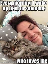 Cat Lady Meme - 526 best cat lady images on pinterest cat stuff crazy cat lady