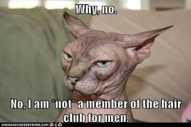 Hairless Cat Meme - why no lolcats lol cat memes funny cats funny cat