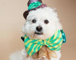 Halloween Pet Costume Harry Potter Dog Costume Halloween Dog Costume Halloween Pet