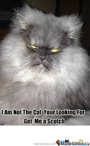 Evil Cat Meme - evil cat by crandios meme center