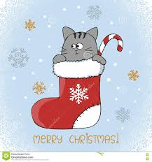 merry christmas card design cute cat in a christmas stocking