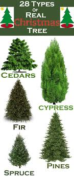 fantastic what of trees are bestl tree