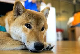 floor cleaners safe for dogs safes bruce hardwood floor cleaner
