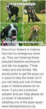 bluetick coonhound rescue illinois 25 best memes about coonhound coonhound memes