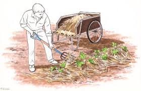 planting a vegetable garden mulch howstuffworks
