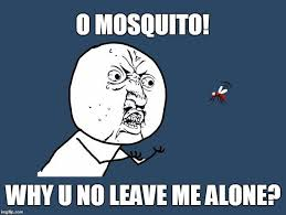 Mosquito Meme - where do mosquitoes go during the daytime science abc